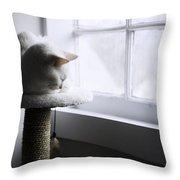Content Cat Throw Pillow