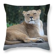 Contented Lioness Throw Pillow