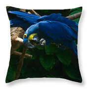 Contorted Parrots Throw Pillow