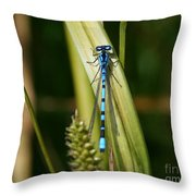 Contrast Alive Throw Pillow