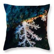 Contrasting Coral Throw Pillow