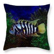 Convict Cichlid Fish Throw Pillow
