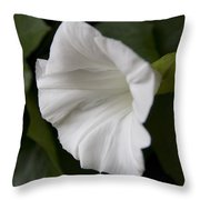 Convolvulus Weed Throw Pillow