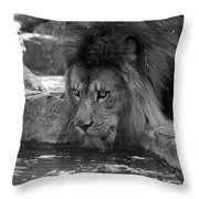 Cool Drink Of Water  Black And White  T O C Throw Pillow