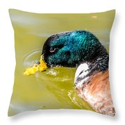 Cool Off The Bill Throw Pillow