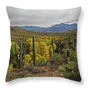 Coon Creek Looking South Throw Pillow