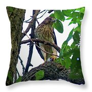 Cooper Hawk Throw Pillow