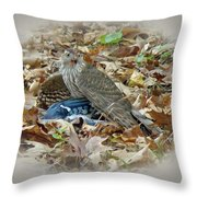Cooper's Hawk - Accipiter Cooperii - With Blue Jay Throw Pillow