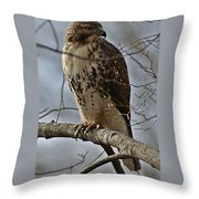 Cooper's Hawk 2 Throw Pillow