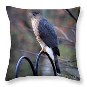 Coopers Hawk In Autumn Throw Pillow