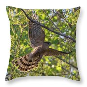Cooper's Hawk In Early Morning Light Throw Pillow