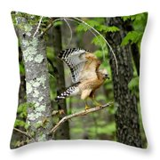 Coopers Hawk In New Hampshire Throw Pillow