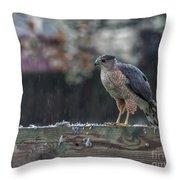 Cooper's Hawk In The Rain Throw Pillow