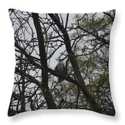 Cooper's Hawk Perched In Tree Throw Pillow