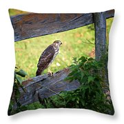 Coopers Hawk Perched On A Weathered Fence Throw Pillow