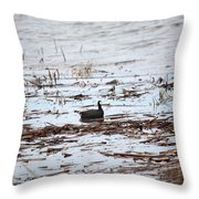 Coot In The Weeds Throw Pillow