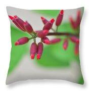 Coral Bean Plant Throw Pillow