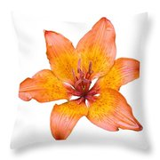 Coral Colored Lily Isolated On White Throw Pillow