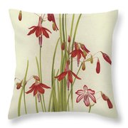 Coral Drops  Bessera Elegans Throw Pillow