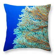 Coral In Pohnpei, Micronesia Throw Pillow
