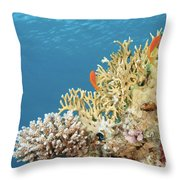 Coral Reef Eco System Throw Pillow