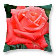 Coral Rose At Pilgrim Place In Claremont-california   Throw Pillow