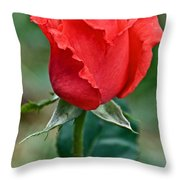 Coral Rosebud At Pilgrim Place In Claremont-california   Throw Pillow