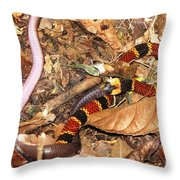 Coral Snake Snack Throw Pillow