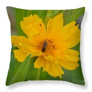 Coreopis Honey Bee Throw Pillow