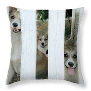 Corgis Three Throw Pillow