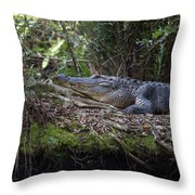 Corkscrew Swamp - Really Big Alligator Throw Pillow