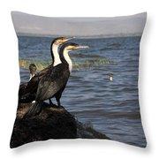 Great Rift Cormorants Throw Pillow