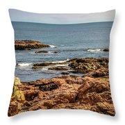 Cormorants And Seagulls Resting Throw Pillow