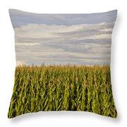 Corn Field In Sunset Throw Pillow