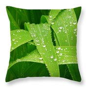 Corn Leaves After The Rain Throw Pillow