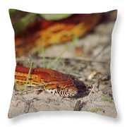Corn Snake 2 Throw Pillow