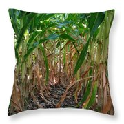 Corn Tunnel Throw Pillow
