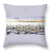 Cornfield In Winter Throw Pillow