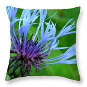 Cornflower Centaurea Montana Throw Pillow