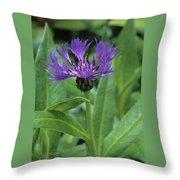 Cornflower Purple Surprise V1 Throw Pillow