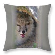 Corsac Fox- Vulpes Corsac 01 Throw Pillow