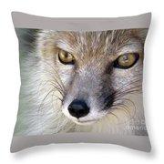 Corsac Fox- Vulpes Corsac 02 Throw Pillow