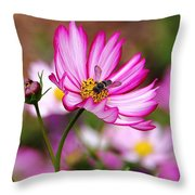 Cosmos Welcoming Throw Pillow