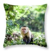 Costa Rica Capuchin Monkey II Throw Pillow