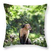 Costa Rica Capuchin Monkey Throw Pillow
