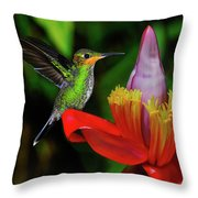 Costa Rican Hummingbird Throw Pillow
