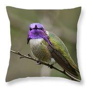 Costa's Hummingbird, Solano County California Throw Pillow