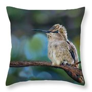 Costa's Hummingbird - Square Throw Pillow