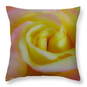 Cotton Candy Roses Throw Pillow