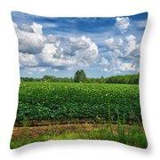 Cotton Fields Of Sc Throw Pillow
